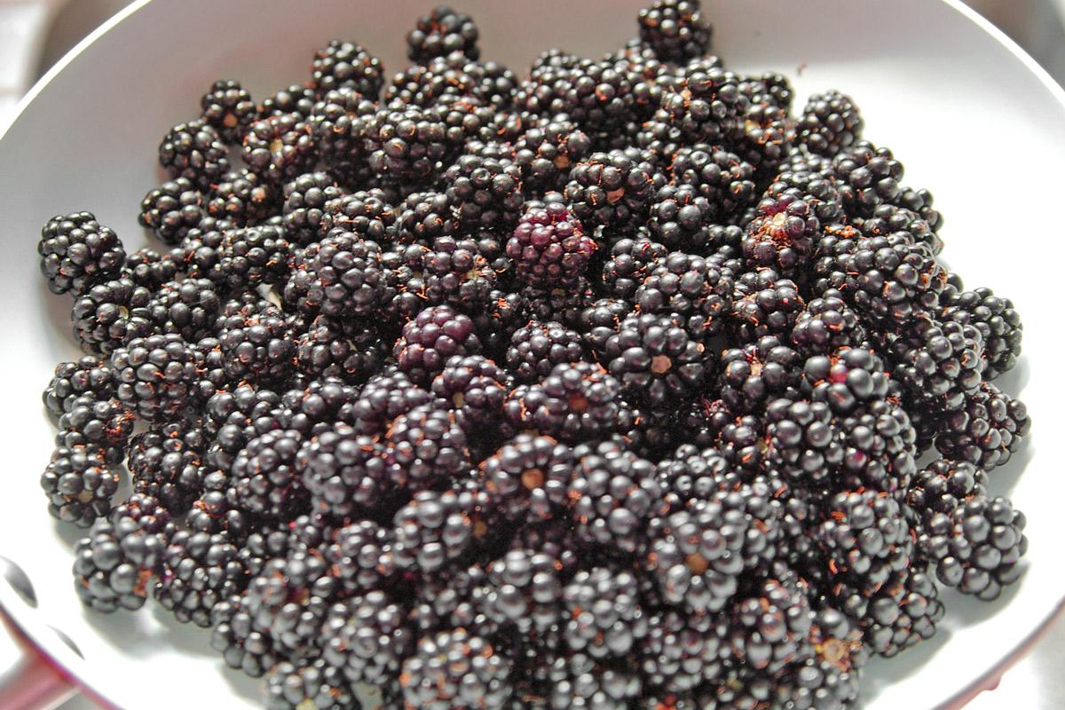 Blackberry season